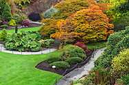 Fall at the gardnes in Queen Elizabeth Park in Vancouver, British Columbia, Canada