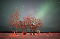 The northern lights glow over a telephone booth and group of trees in the arctic circle at Bettles, Alaska.