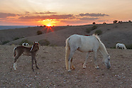 PLACITAS WILD HORSES: MARE WITH FOAL