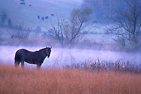 Horse and farmland in the mist.