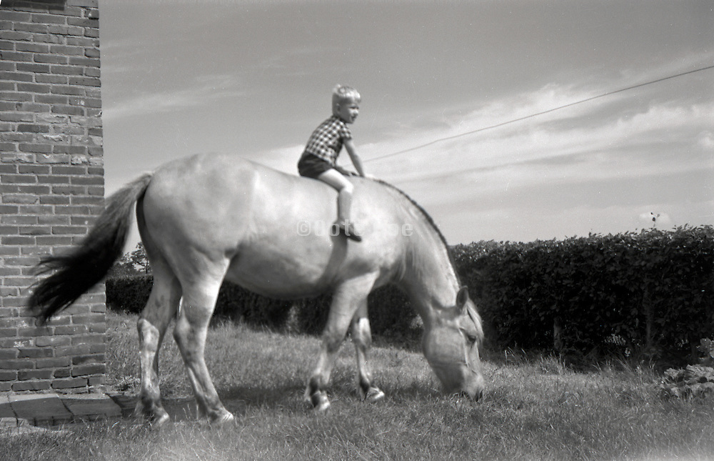 a little boy sitting on the back of a big horse Holland 1960s