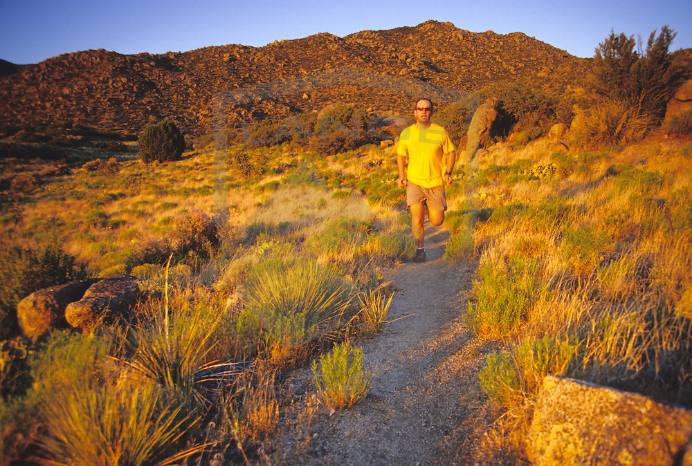 outdoor sports and recreation and nature scenery: male (man) trail runner in stride with yellow shirt trail running at sunset in the sandia mountains of albuquerque, new mexico, usa