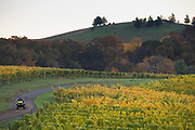 Bethel Heights Vineayrd & winery, fall colors, Eola-Amity Hils AVA, Willamette Valley, Oregon