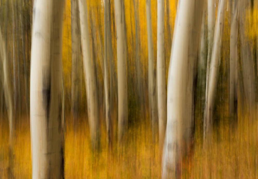 Aspen tree blur, Rocky Mountain National Park, Colorado