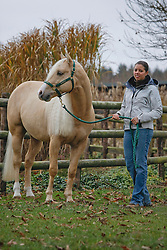 Baeck Cira & Suzy<br /> Eifel Gold Ranch - Monteneau 2008<br /> Photo © Hippo Foto