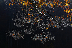 Red River Gorge Fall 2010 Roadside Pulloff Wednesday, Oct. 27, 2010.  Photo by Jonathan Palmer