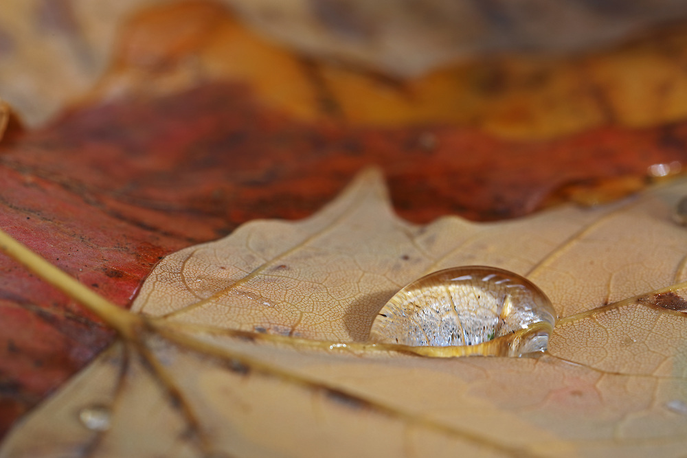 http://juergen-roth.pixels.com/featured/tiny-lanscape-juergen-roth.html &lt;&lt;&lt; &quot;Buy a Print&quot; - Tiny landscape photography of a leaf with a raindrop photography images are available as museum quality photography prints, canvas prints, acrylic prints or metal prints. Prints may be framed and matted to the individual liking and room decor needs.<br />