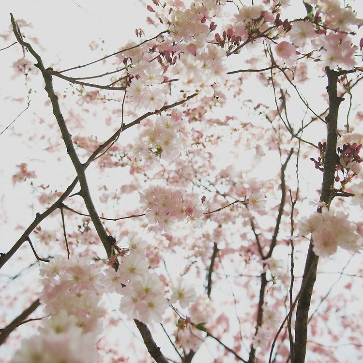 ©Rebecca Douglas - www.rebeccadouglas.co.uk - www.facebook.com/rebeccadouglasphotography