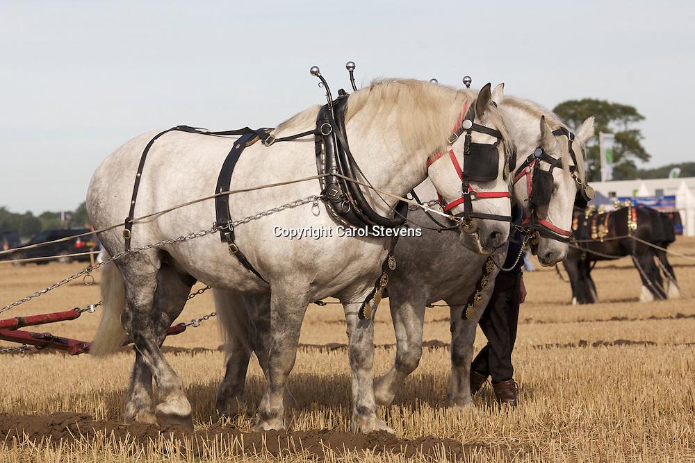 European Horse Ploughing Competition 2016<br /> Steven Glavin