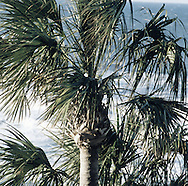 FL Palm Trees