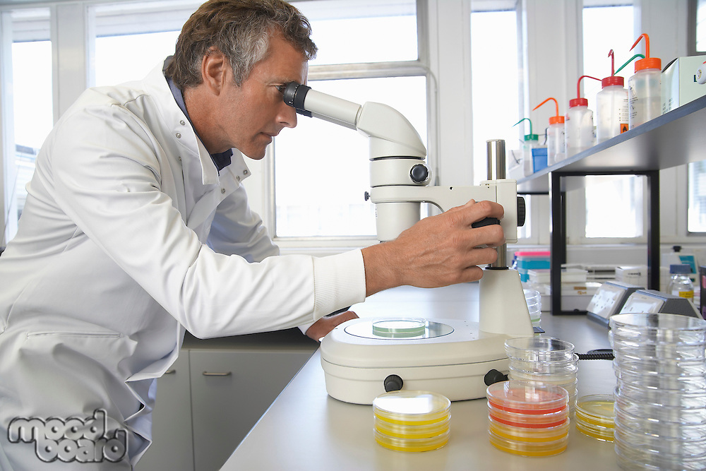 Male lab worker adjusting microscope to examine petri dish