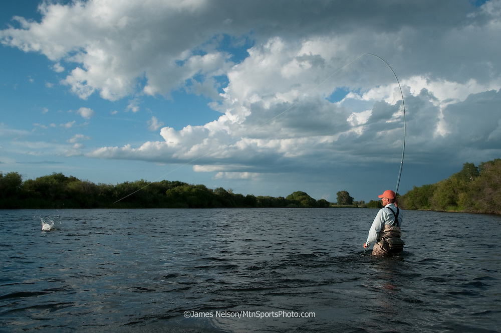 A fly fisherman plays a trout on the lower Henry's Fork of the Snake River, Idaho.