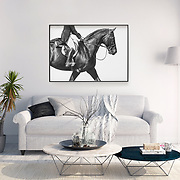Equine Gallery