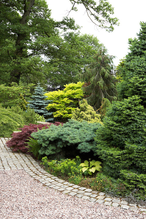 various conifers in garden at Cypress House. Dalton
