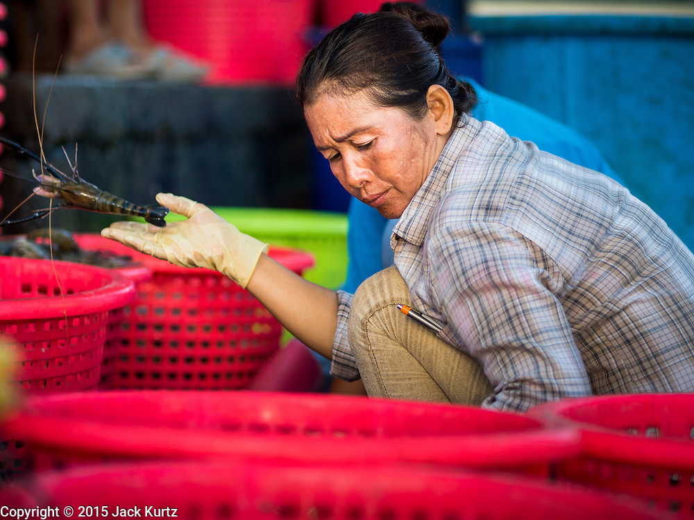 """11 JUNE 2015 - MAHACHAI, SAMUT SAKHON, THAILAND: A Burmese migrant worker at the Samut Sakhon shrimp market sorts farm raised shrimp. Labor activists say there are about 200,000 migrant workers from Myanmar (Burma) employed in the fishing and seafood industry in Mahachai, a fishing port about an hour southwest of Bangkok. Since 2014, Thailand has been a Tier 3 country on the US Department of State Trafficking in Persons Report (TIPS). Tier 3 is the worst ranking, being a Tier 3 country on the list can lead to sanctions. Tier 3 countries are """"Countries whose governments do not fully comply with the minimum standards and are not making significant efforts to do so."""" After being placed on the Tier 3 list, the Thai government cracked down on human trafficking and has taken steps to improve its ranking on the list. The 2015 TIPS report should be released in about two weeks. Thailand is hoping that its efforts will get it removed from Tier 3 status and promoted to Tier 2 status.        PHOTO BY JACK KURTZ"""
