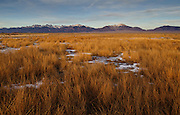 Winter meadows  and a view of the Sangre de Cristo Range, Medano Ranch, San Luis Valley, Colorado