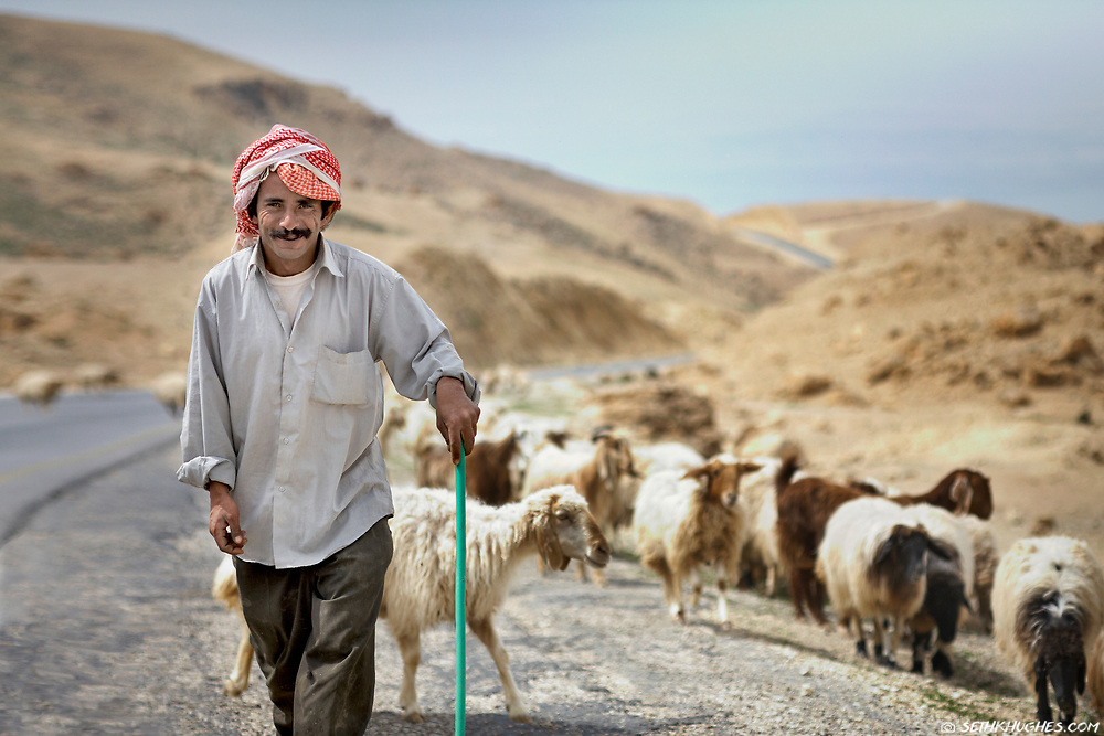 A sheperd tends to his flock along the road near the Dead Sea. Madaba, Jordan.
