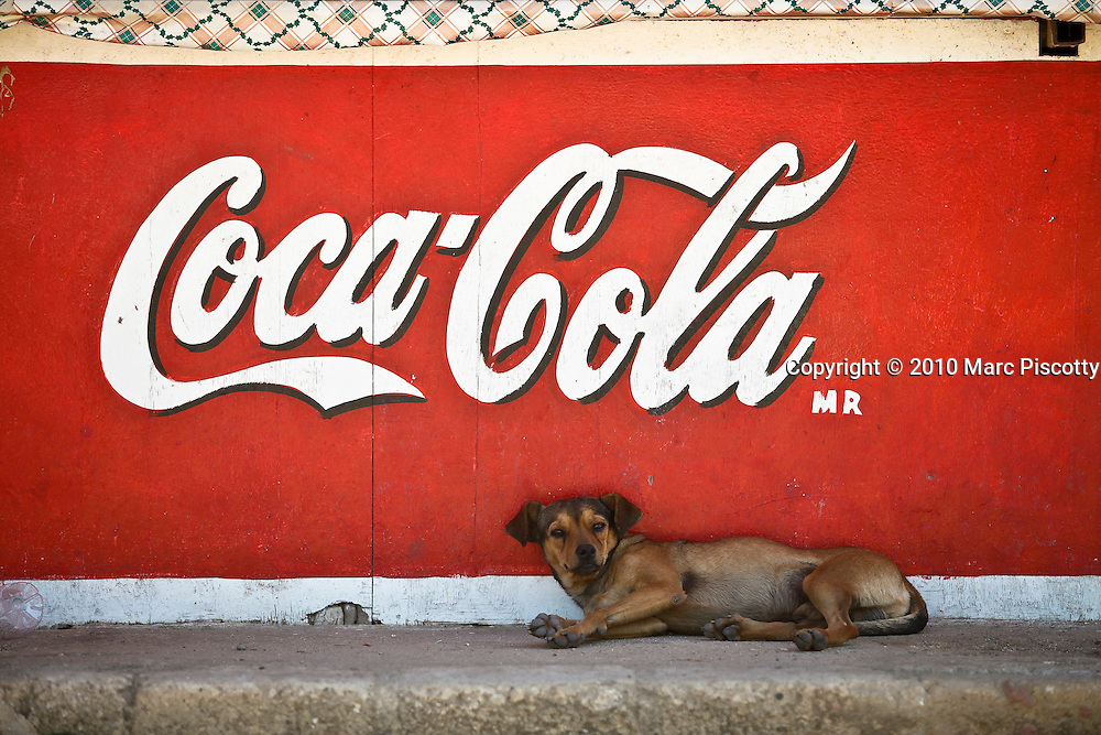 "SHOT 1/22/10 11:32:36 AM - A street dog sleeps under a Coca Cola sign in a street stall one afternoon in Sayulita, Mexico. Stray dogs can be a problem in some Mexican towns and cities but Sayulita has managed to spay and neuter a large number of the strays on the street keeping populations in check. Sayulita is a small fishing village about 25 miles north of downtown Puerto Vallarta in the state of Nayarit, Mexico, with a population of approximately 4,000. Known for its consistent river mouth surf break, roving surfers ""discovered"" Sayulita in the late 60's with the construction of Mexican Highway 200. In recent years, it has become increasingly popular as a holiday and vacation destination, especially with surfing enthusiasts and American and Canadian tourists. (Photo by Marc Piscotty / © 2009)"