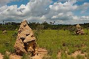 Termite mounds<br /> Savannah, <br /> Rupununi<br /> GUYANA<br /> South America