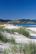 blue skies, rolling hills and white sand dunes complement the stunning turquoise water at Matarangi Beach, Coromandel Peninsula, New Zealand