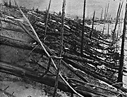 The Tunguska Event, or Tunguska Explosion, 30 June 1908, near the  Podkamennaya, Tunguska River,  Krasnoyarsk Krai, Russia. Cause disputed, but generally accepted as caused by a meteorite. Detail of blasted trees.