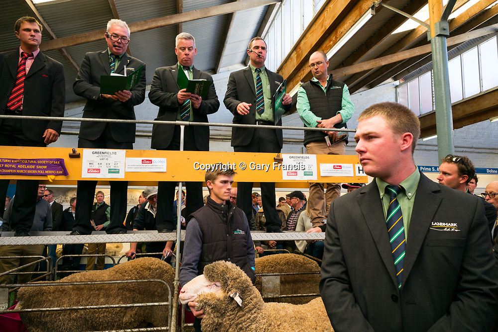 2017 SA Stud Merino and Poll Merino Ram Sale at the Stud Sheep Pavilion, Adelaide Showground on Friday 8th of September 2017