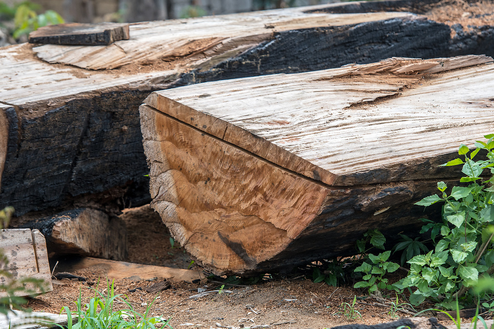 A split tree trunk sits on the ground in Ganta, Liberia