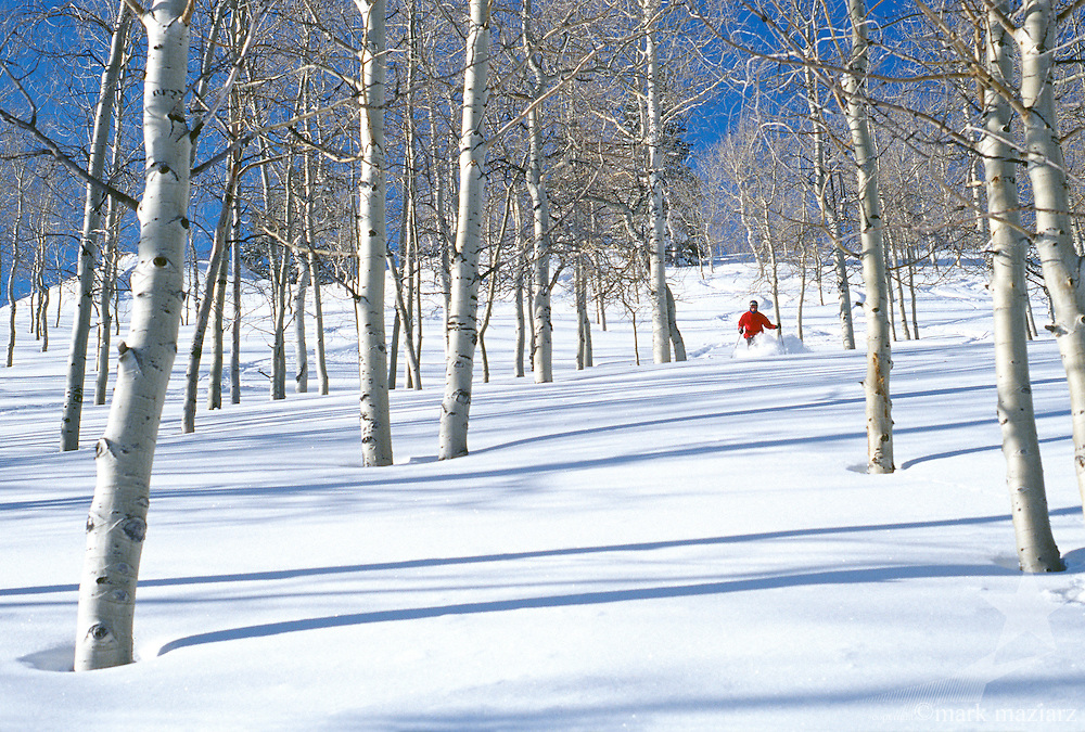Chris skiing powder in trees at Deer Valley, Utah, USA