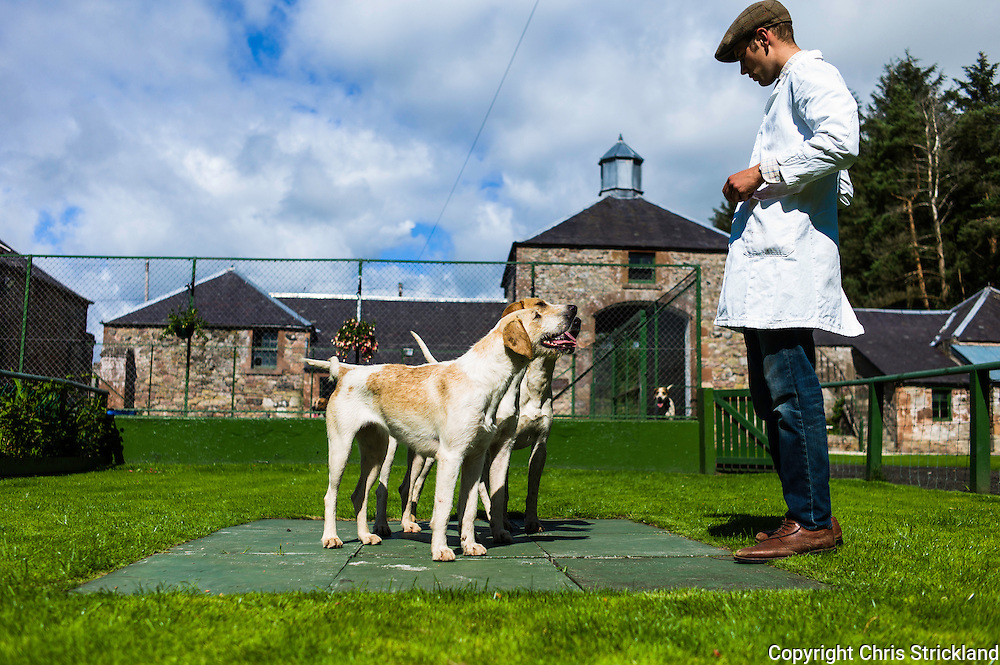 Abbotrule, Bonchester Bridge, Hawick, Scotland, UK. 19th July 2015. Huntsman Johnny Richardson works with hounds on the showing slabs. Madam is nearest.
