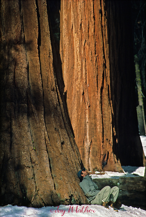 Elderhostel instructor Mike Carr sits at the base of a giant redwood in the Mariposa Grove in Yosemite.  He was guiding a group of senior citizens through the trees and the group had stopped for a lunch beak.  January 1989