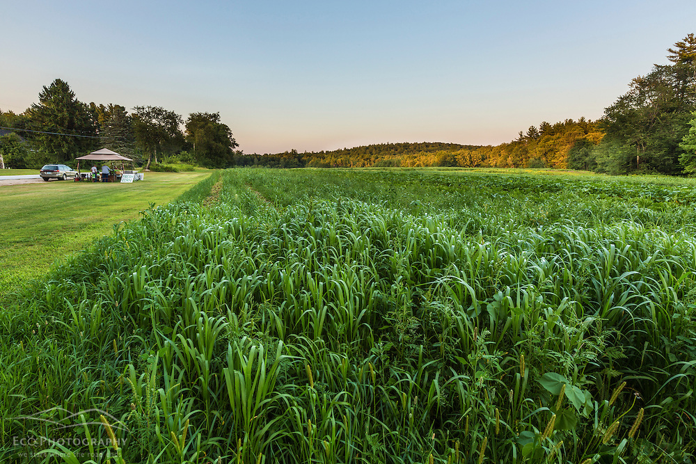 A farm field in Epping, New Hampshire.