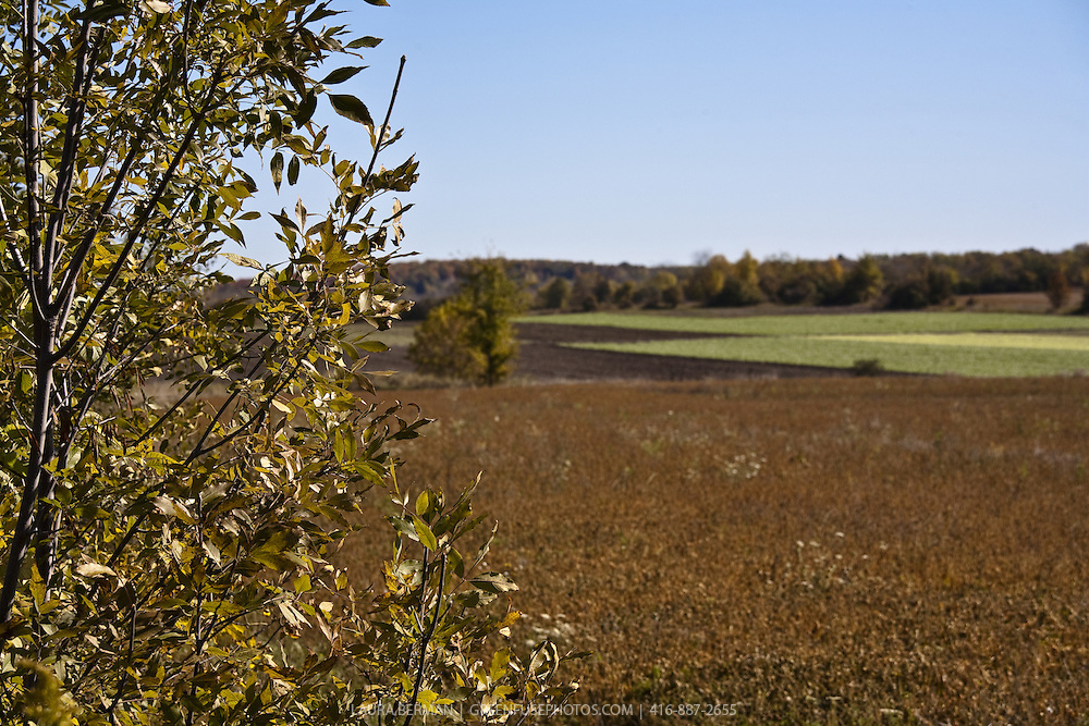 Stock photo of a farm field in autumn under a clear blue sky with a band of green crops among the rich, rusty  autumn colors.