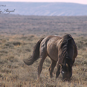 ABIGAIL'S PORTFOLIO<br />