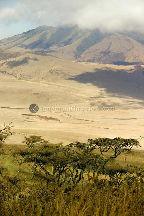 Acacia trees on a hillside in the Ngorongoro Conservation Area (NCA), near Arusha, Tanzania.