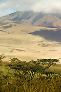Acacia trees on a hillside in the Ngorongoro Conservation Area (NCA), near Arusha, Tanzania.