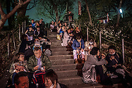 So many people attend the o-hanami, cherry blossom viewing, festival that outdoor stairways in Ueno Park are packed with people.  Tokyo, Japan.