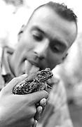 Hallucinogenic Australian Cane toad.