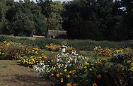 Chateau  Saint Jean de Beauregard  greenhouse of ancient vegetables   - France  greenhouse of ancient vegetables