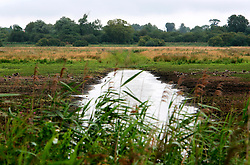 UK ENGLAND CAMBRIDGESHIRE WICKEN 7AUG06 - Low level of water on a small lake in the Wicken Fen National Nature Reserve, managed by the National Trust is one of Britain's oldest nature reserve dating back to the late 1800s...jre/Photo by Jiri Rezac..© Jiri Rezac 2006..Contact: +44 (0) 7050 110 417.Mobile:  +44 (0) 7801 337 683.Office:  +44 (0) 20 8968 9635..Email:   jiri@jirirezac.com.Web:    www.jirirezac.com..© All images Jiri Rezac 2006 - All rights reserved.