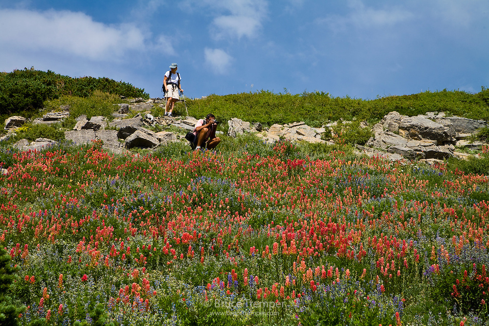 Two hikers enjoy the indian paintbrush, Alta, Utah