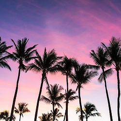 Maui Hawaii sunrise palm trees photo in pink and blue. Copyright ⓒ 2019 Paul Velgos with All Rights Reserved.