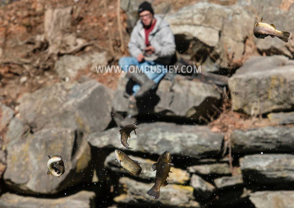 A fisherman watches from the shore the Department of Environmental Conservation releases trout into the Neversink River  in Myers Grove, New York, on the opening day of trout season in New York State.  The DEC stocked 5,450 yearling brown trout and 550 two year-old brown trout in the Neversink.