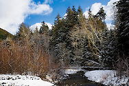 Winter scene of trees and snow on the edge of the Carbon River in Mount Rainier Natl Park