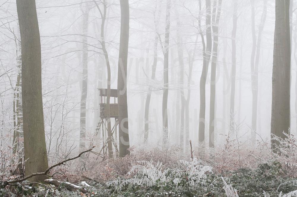 Wald mit Raureif, Nebel, Bahnholz, Sonnenberg, Wiesbaden, Hessen, Deutschland | white frost,  fog, forest, Sonnenberg, Wiesbaden, Hesse, Germany
