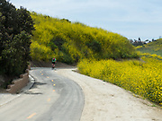 A Man Bicycling Through a Mustard Field Bloom in Laguna Niguel California