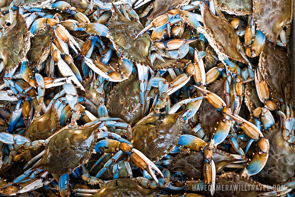 The famous blue crabs from the Chesapeake Bay on sale at the Maine Avenue Fish Market in Washington DC, the oldest continuously operating open air fish market in the United States.