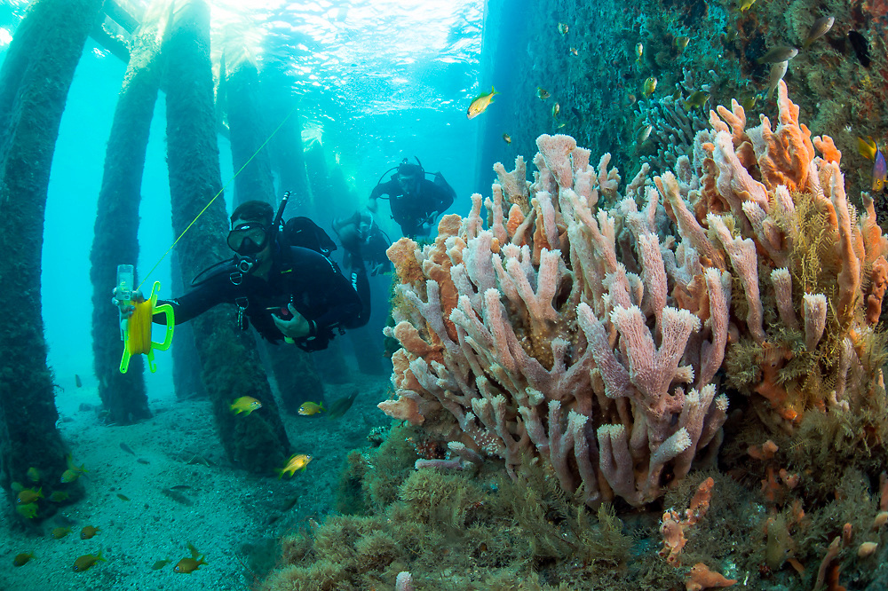 Scuba divers swim underneath the Blue Heron Bridge in the Lake Worth Lagoon, one of the most popular scuba diving certification locations in Florida.