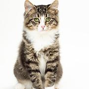 20190218 Dean Cats