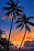 Coconut Palm Tree, Sunset, Hawaii