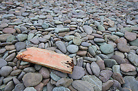 Close up of drift wood on pebbles